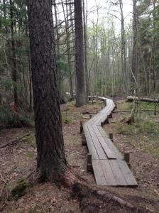 Spånggång genom en sumpskog fram till grillplatsen. Spången börjar efter ca 400 m från starten på 1,25 km-spåret. Men missar du starten gör det ingen, efter en stund går spåret precis vid vindskydden och eldstaden.