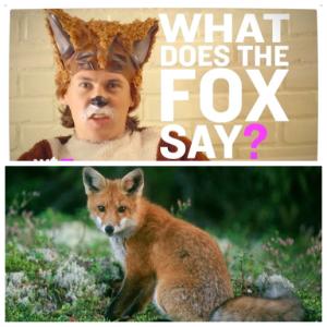 Ylvis och många andra undrar hur räven låter...?