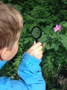 Nya upptäckter med ett förstoringsglas.