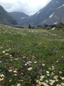 Vackra blomsterängar på vägen mot Trollsjön.