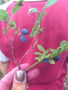 Till vänster en kvist med odon, till höger blåbär. Lika men ändå så olika.