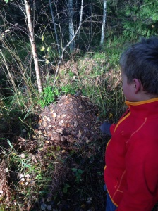 Vi funderar över myrornas vinterplaner vid en myrstack i höstsolen.