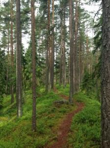 ... eller skog, det är frågan.
