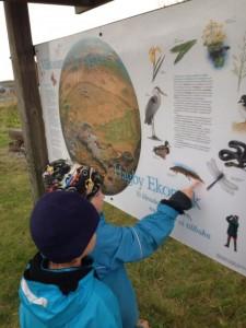 Vi läste att det finns vattensalamandrar här. Till våren ska vi tillbaka och leta efter dem.